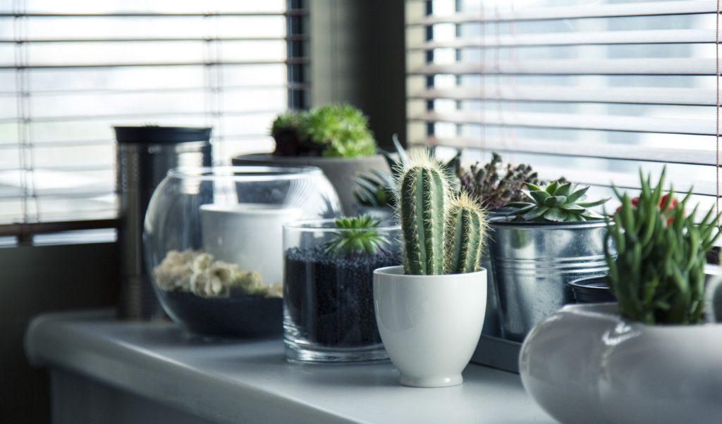 PlantGrowPick Seedling Pots
