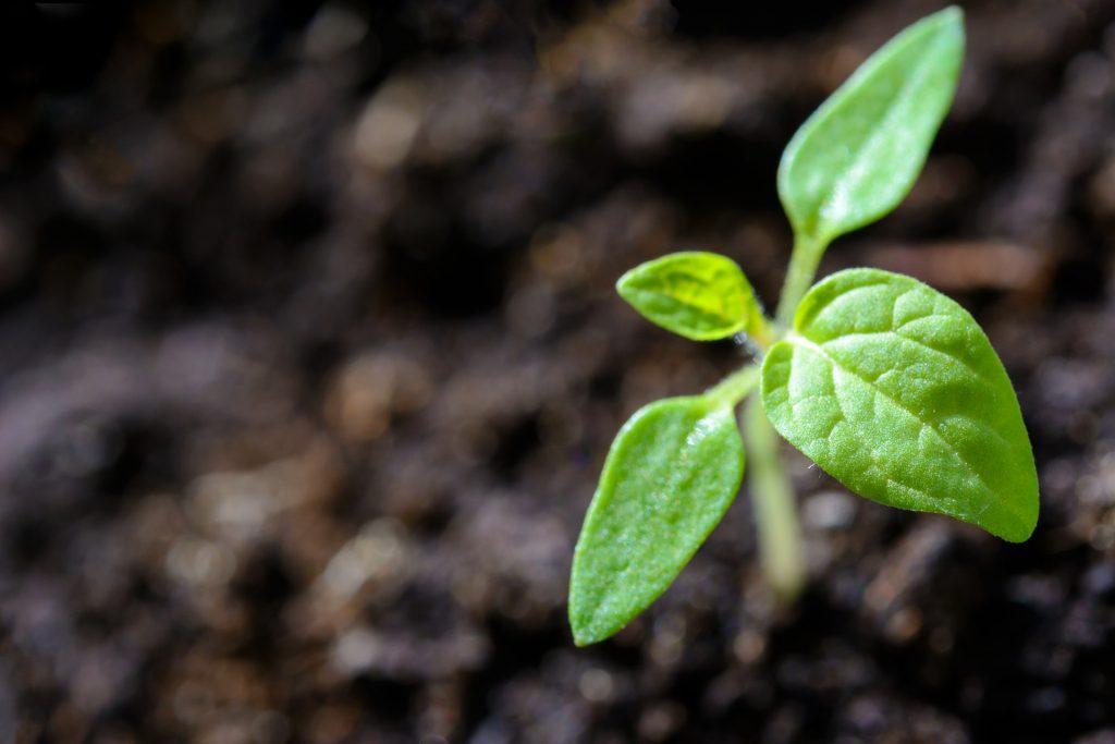PlantGrowPick planting