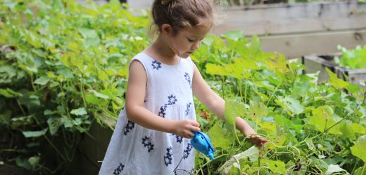 Plantgrowpick – Tips to Plant Seasonal Vegetables at Home