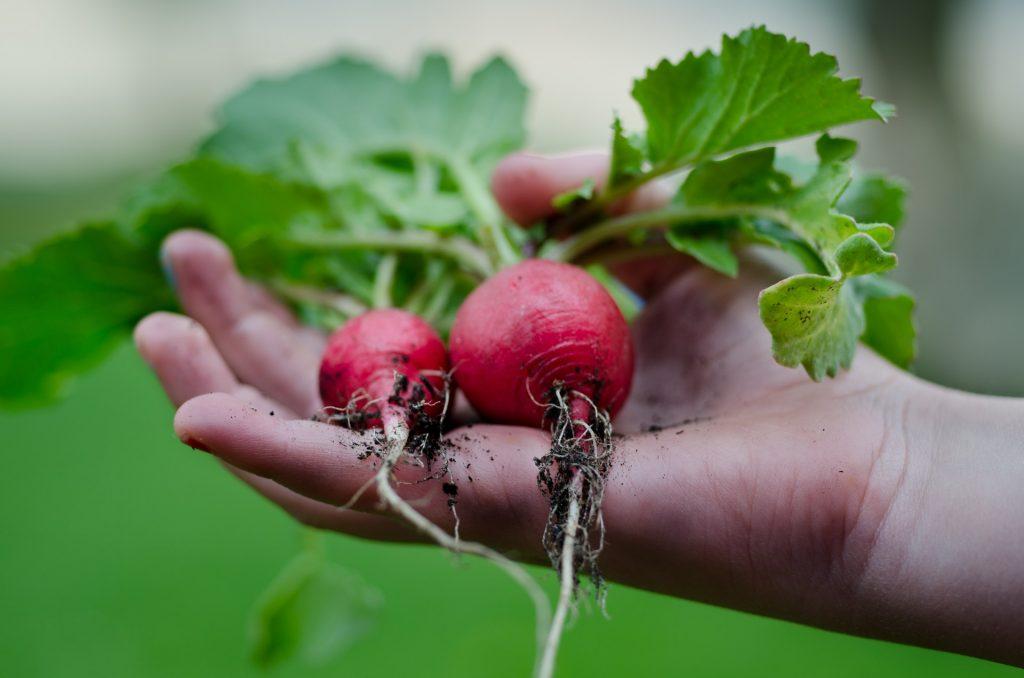 PlantGrowPick Harvest