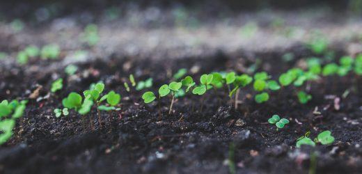 10 Smart ways to Create an Eco-Friendly Garden
