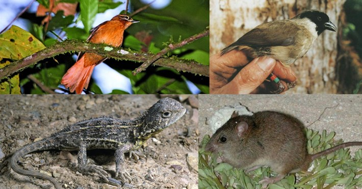 Australia lost Hundreds of species