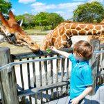 The Best Kid-Friendly Spots in Miami