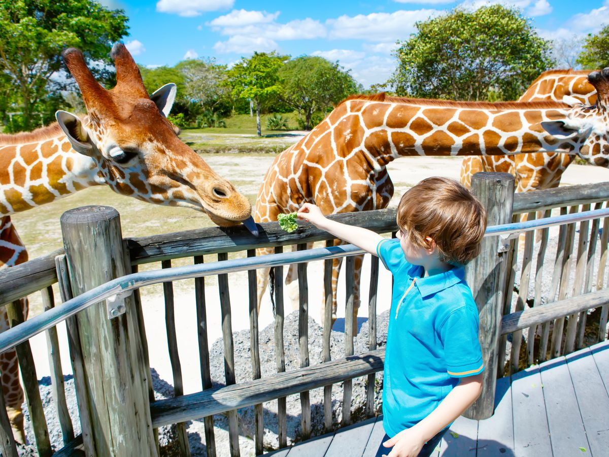 The Best Kid-Friendly Spots in Miami